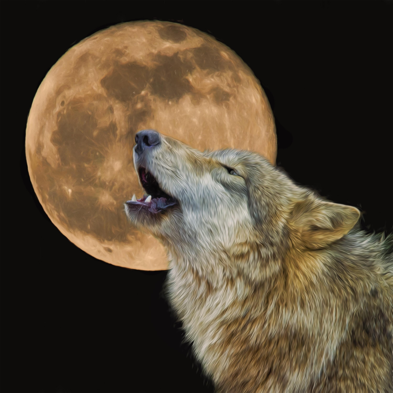 Howling-at-Moon